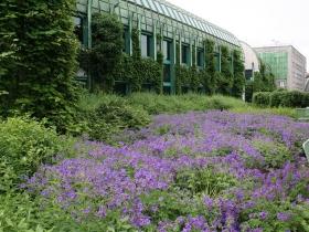 Ogród na dachu Biblioteki Uniwersytetu Warszawskiego