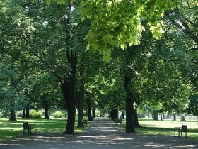 Park Izabeli i Jarogniewa Drwęskich w Poznaniu