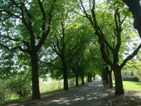 Park Tadeusza Mazowieckiego w Poznaniu
