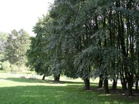 Park Tysiąclecia w Krakowie