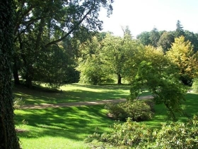 Arboretum w Głuchowie
