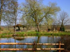 Arboretum w Luzinie