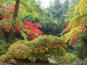 Arboretum w Przelewicach