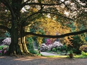 Arboretum Wojsławice (2)