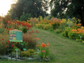 Arboretum Wojsławice latem_TN
