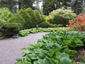 Arboretum Wojsławice - roślinny dinozaur