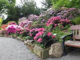 Arboretum Wojsławice w maju