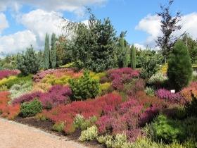 Kapias - Ogrody do zwiedzania - wrzesień 2013 - jak sama nazwa mówi wrzesień to miesiąc kwitnących wrzosów!