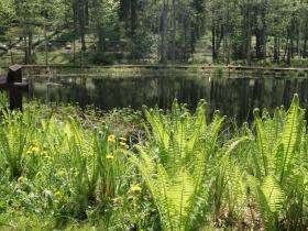 Leśne Arboretum Warmii i Mazur w Kudypach