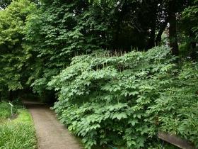 Ogród Botaniczny Uniwersytetu Warszawskiego