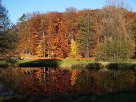 Ogród Botaniczny w Bydgoszczy