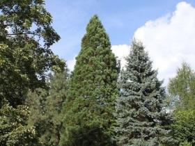 Ogród botaniczny w Oliwie