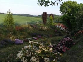 ogrod brzoskwinia (13).jpg