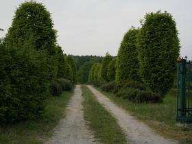 ogrod brzoskwinia (28).jpg