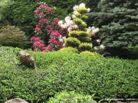 Ogród Japoński w Jarkowie