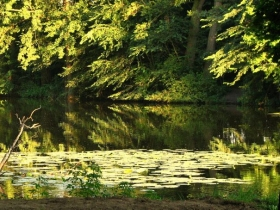 Ogród Puławski