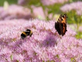 GW fauna i flora (1)