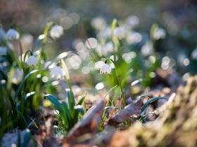 Śnieżycowy jar
